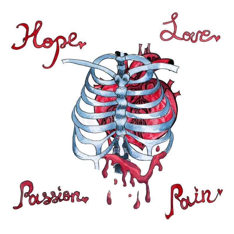 Akwareli krwawiący ludzki serce wśrodku zredukowanych kości ilustracja wektor