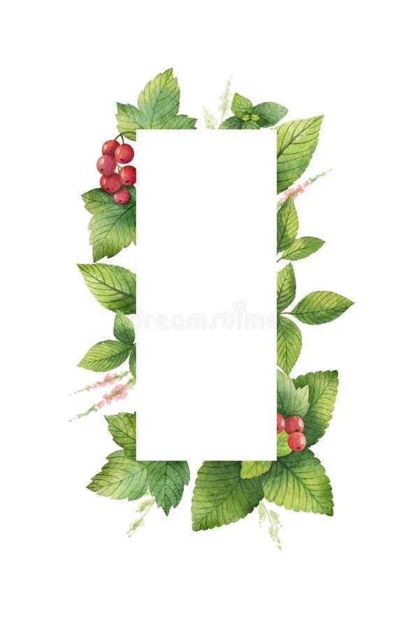Akwareli kwiecista prostokątna rama z zielonymi ziele i pikantność opuszcza na białym tle i gałąź odizolowywać royalty ilustracja