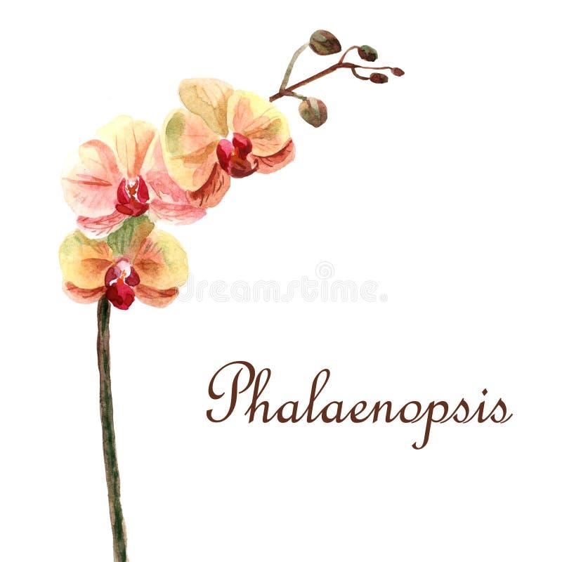 Akwareli lata jaskrawa ilustracja z tropikalnymi kwiatami ilustracja wektor