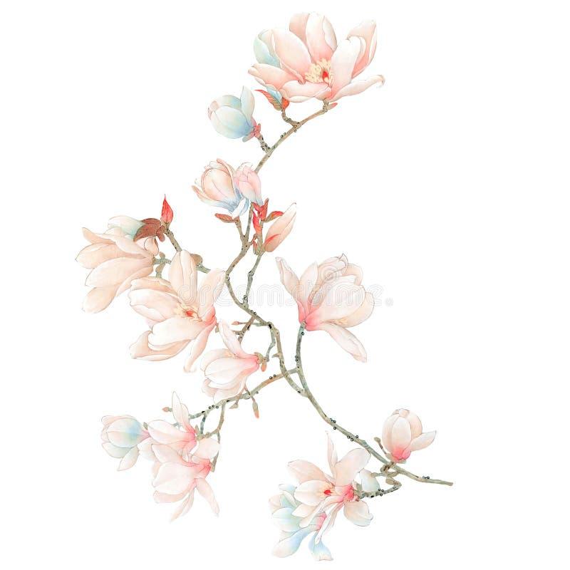 Akwareli magnolia kwitnie i rozgałęzia się ilustracja wektor