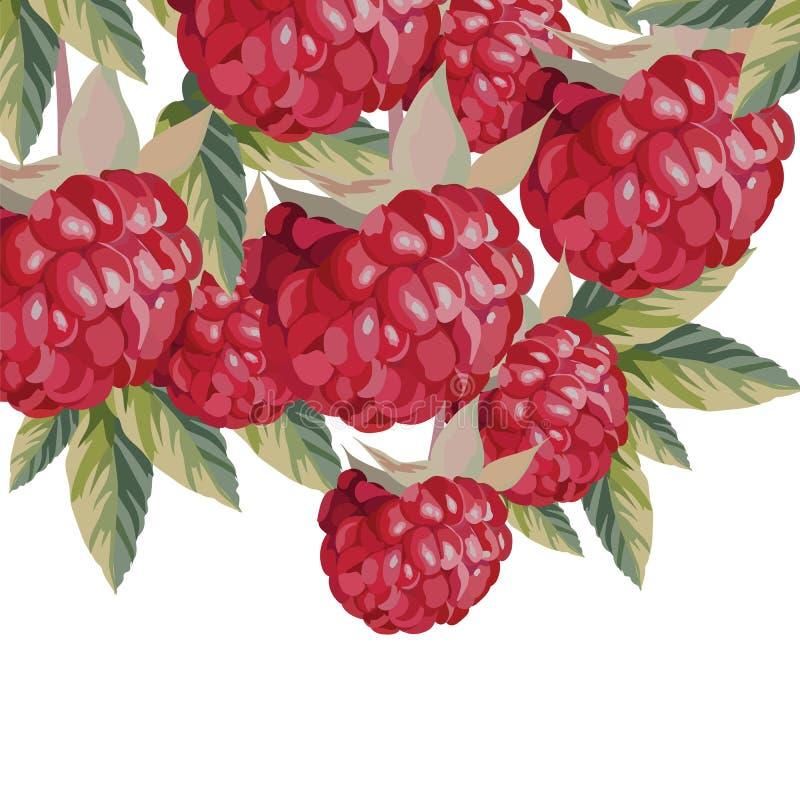 Akwareli malinek owoc ilustracji