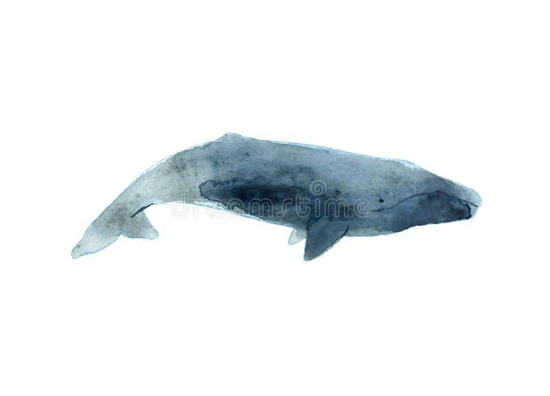 Akwareli nakreślenie szary wieloryb tła cogwheel ilustraci odosobniony biel royalty ilustracja