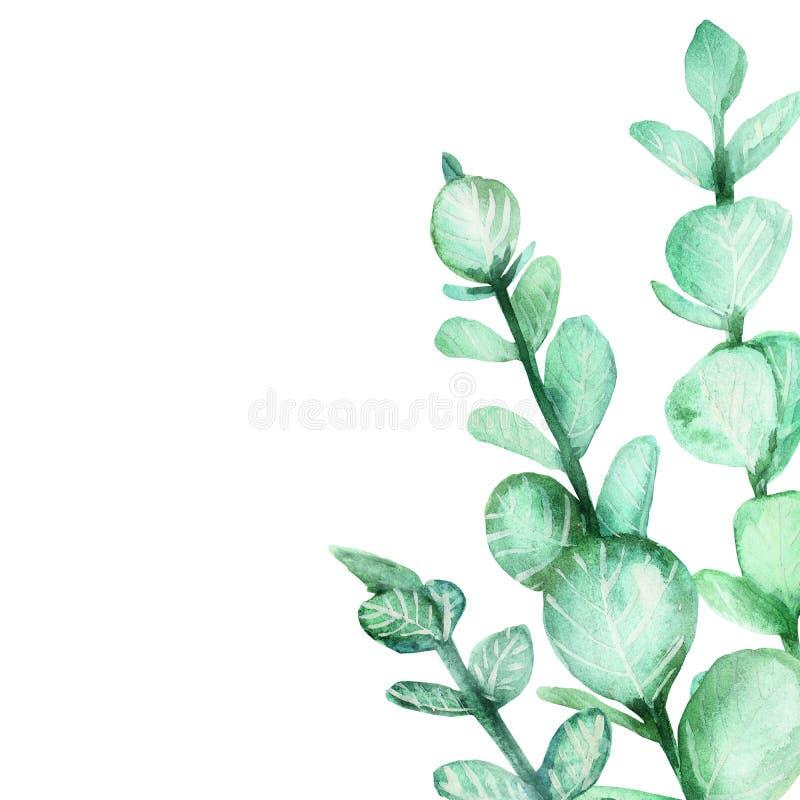 Akwareli natury ręka malujący skład z zielonym eukaliptusem rozgałęzia się z liśćmi w kącie, ilustracja z przestrzenią f royalty ilustracja