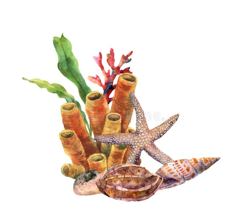 Akwareli nautyczna granica z starish Ręka malująca podwodna ilustracja z gałąź, rafą koralowa i skorupą laminaria, ilustracja wektor