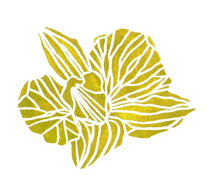 Akwareli OrÑ  chował zielonego kwiatu ilustracja wektor