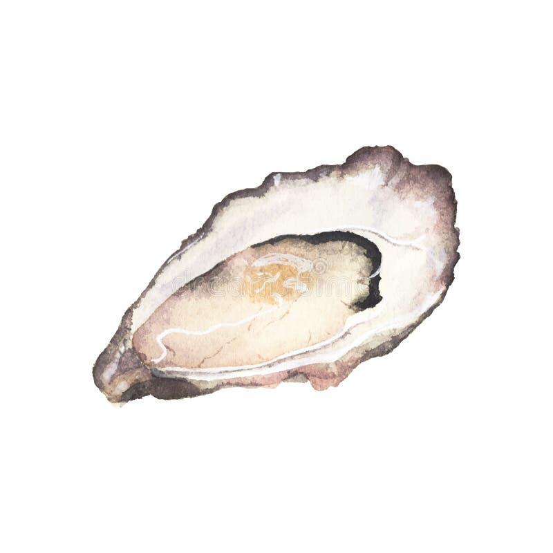 Akwareli ostryga na białym tle ilustracja wektor