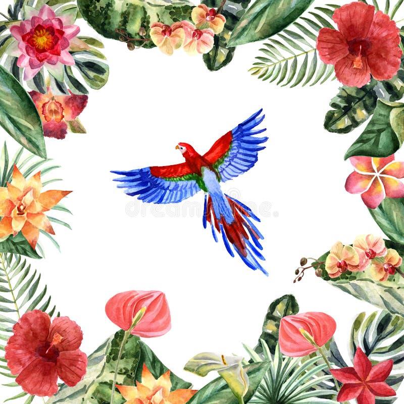 Akwareli papuga odizolowywająca na białym tle ilustracji