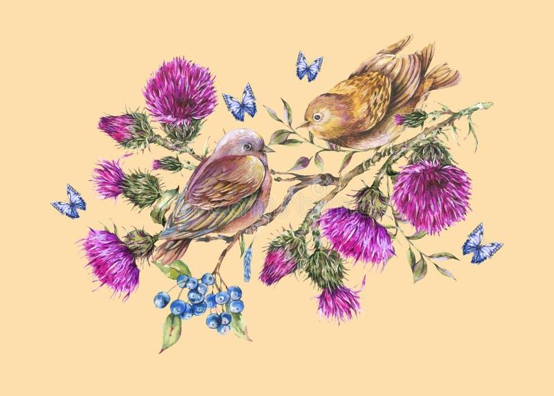 Akwareli para ptaki na gałąź z osetem, jagody, błękitni motyle, dzikich kwiatów ilustracja, łąkowi ziele ilustracji
