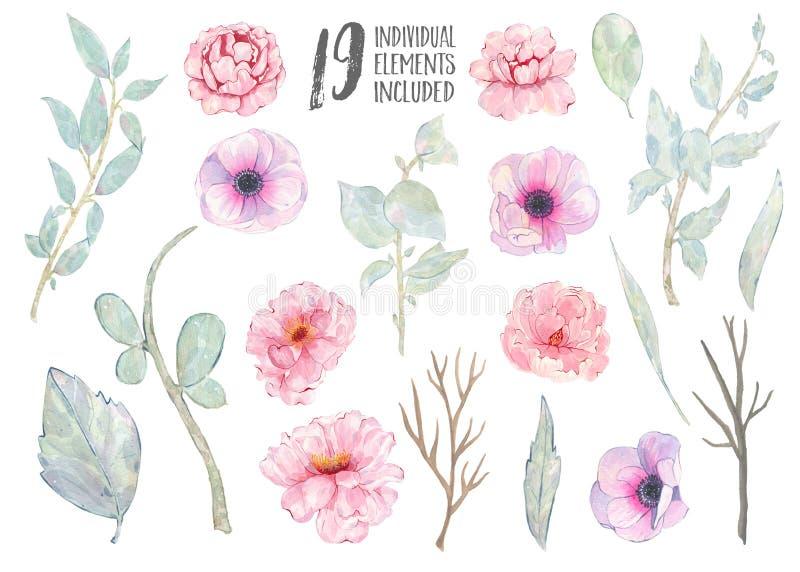 Akwareli peoni zieleni liści ręka malująca różowa anemonowa gałąź odizolowywająca na białym tle ilustracji