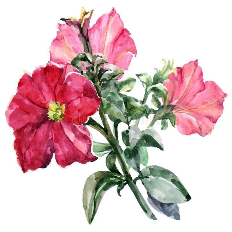 Akwareli petuni czerwony bukiet ilustracja ilustracji