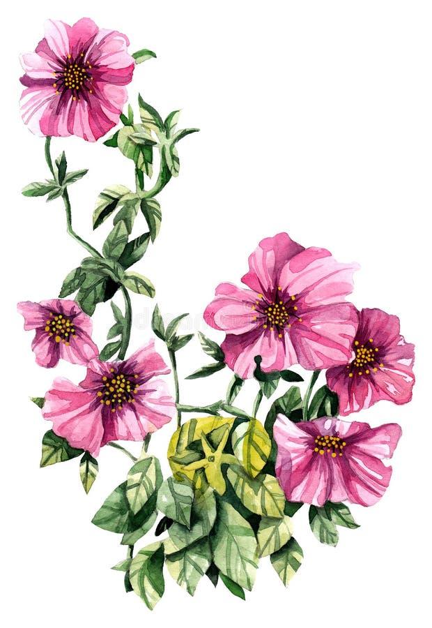 Akwareli petuni ręka malujący kwiat Może używać jako romantyczny tło dla ślubnych zaproszeń, kartka z pozdrowieniami royalty ilustracja