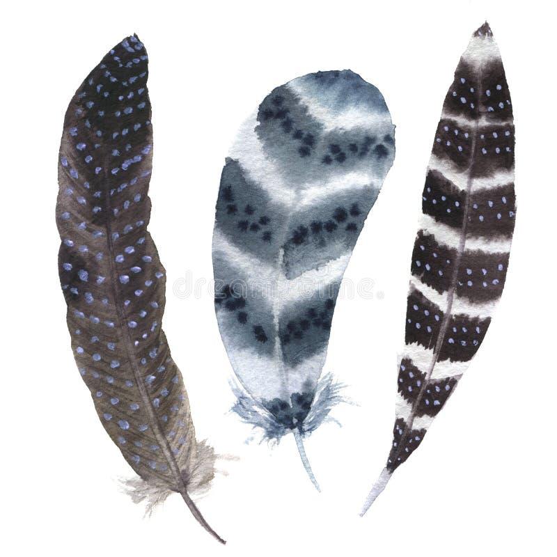 Akwareli piórka wibrujący pasiasty set Boho piórka styl ilustraci piórko Odizolowywający na bielu Ptasiego piórka komarnica royalty ilustracja