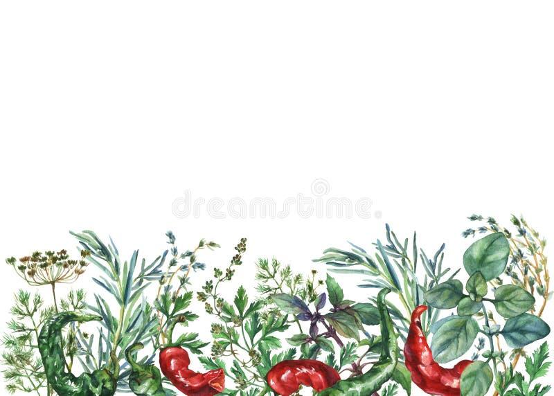 Akwareli pikantność i ziele rama ilustracja wektor