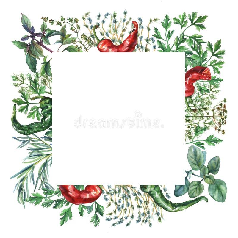 Akwareli pikantność i ziele rama royalty ilustracja
