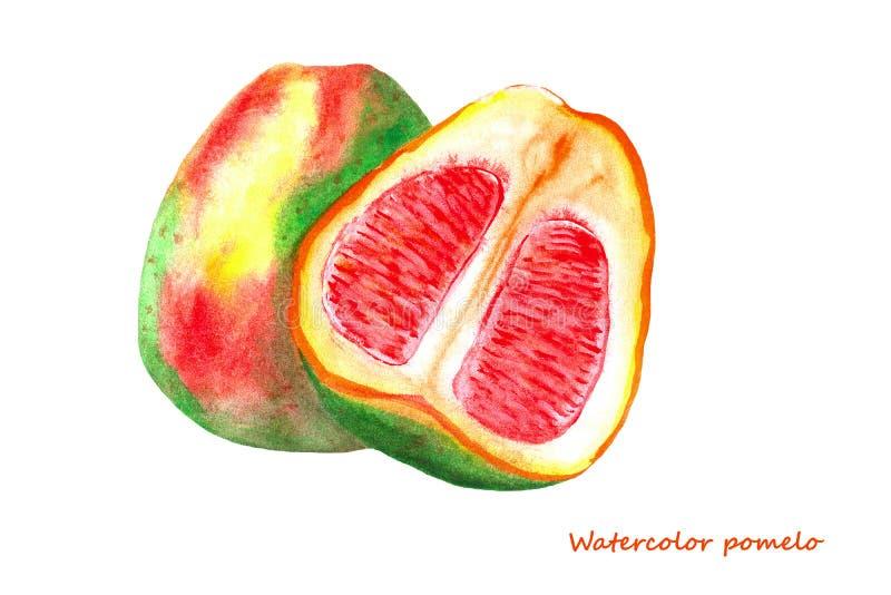 Akwareli pomelo Odosobniona cytrus owoc ilustracja obrazy royalty free