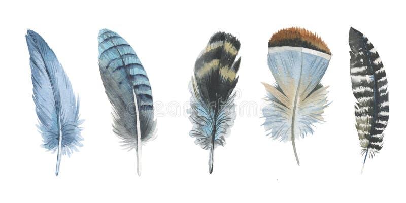 Akwareli ptasi piórko od skrzydła odizolowywającego royalty ilustracja