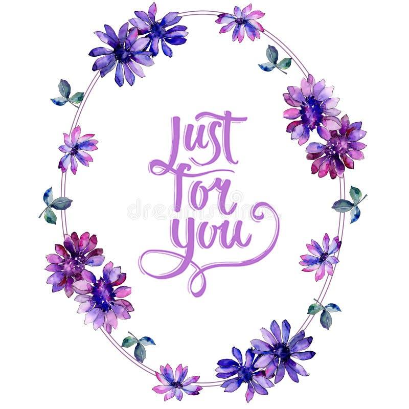 Akwareli purpurowa afrykańska stokrotka Kwiecisty botaniczny kwiat Ramowy rabatowy ornamentu kwadrat royalty ilustracja