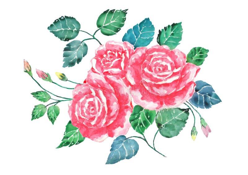 Akwareli róż bukieta różowa sztuka Ręka malująca kwitnie z kolorowymi liśćmi odizolowywa Ilustracja valentine royalty ilustracja
