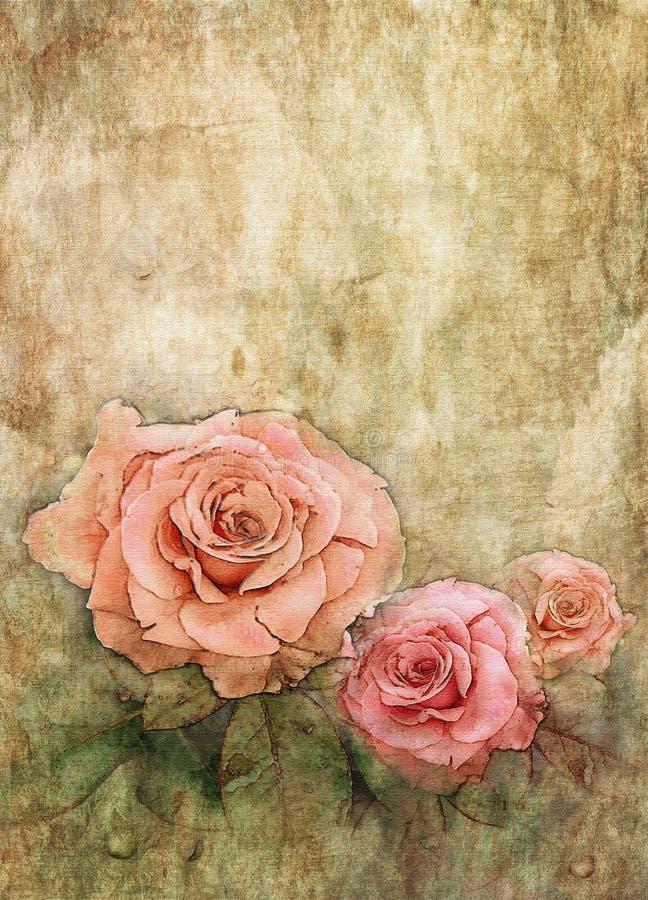 Akwareli róże na grunge ściany teksturze ilustracja wektor