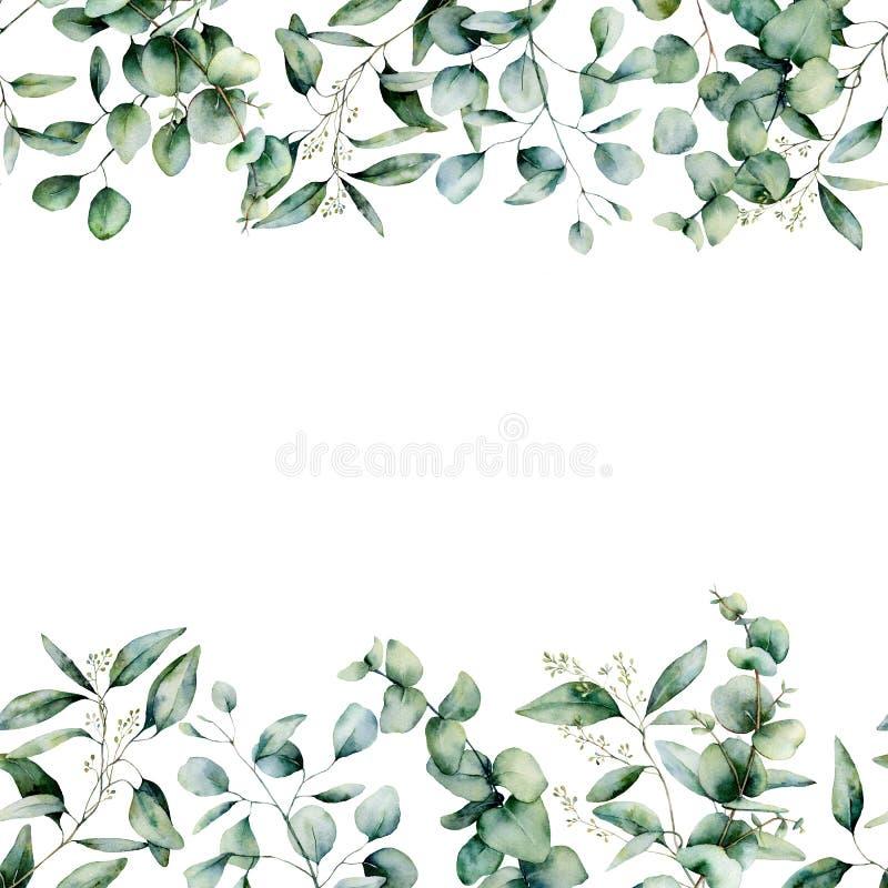 Akwareli r??na eukaliptusowa bezszwowa granica Wręcza malującą eukaliptus gałąź, liście odizolowywających na białym tle i ilustracji