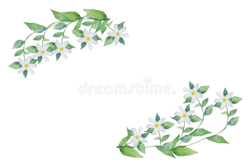 Akwareli ręka malująca openwork ramowa bergamotowa roślina z białymi kwiatami na gałąź z zielonymi liśćmi, ilustracja wektor