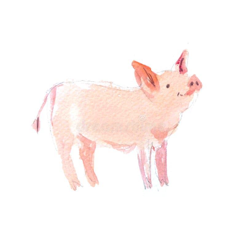 Akwareli ręka rysująca ilustracja śliczne świnie ilustracji
