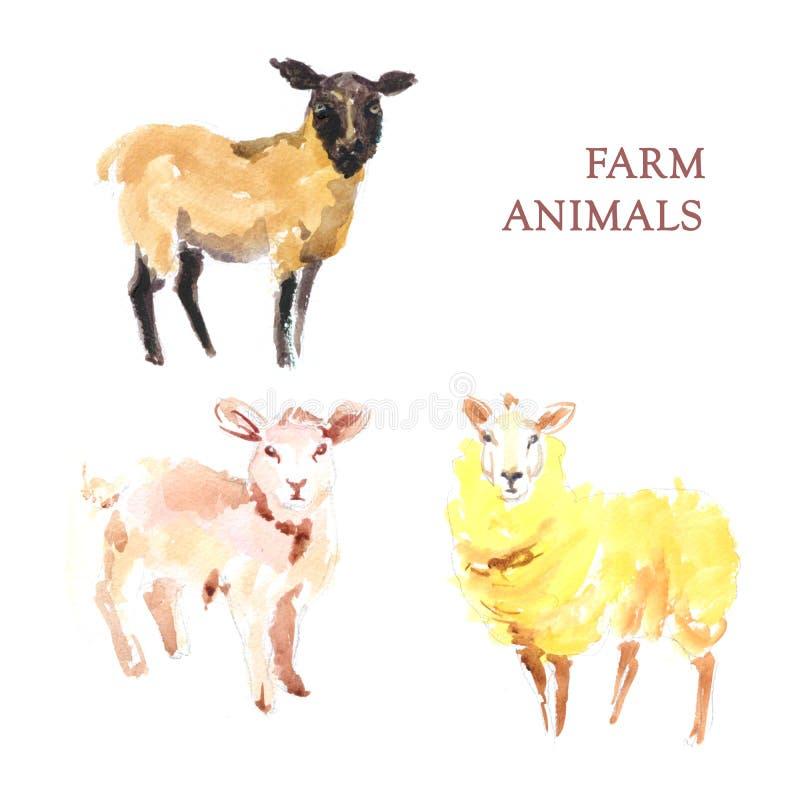 Akwareli ręka rysująca ilustracja sheeps ilustracja wektor
