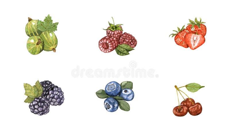 Akwareli ręka rysująca jagoda ustawia odosobnionego na białym tle ilustracji