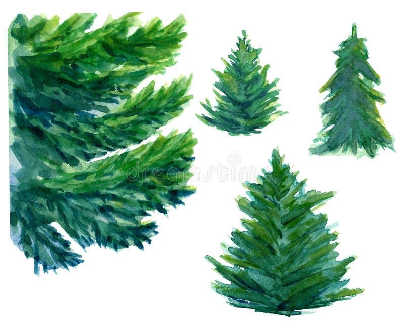 Akwareli ręka rysująca trzy zielonego jedlinowego drzewa royalty ilustracja