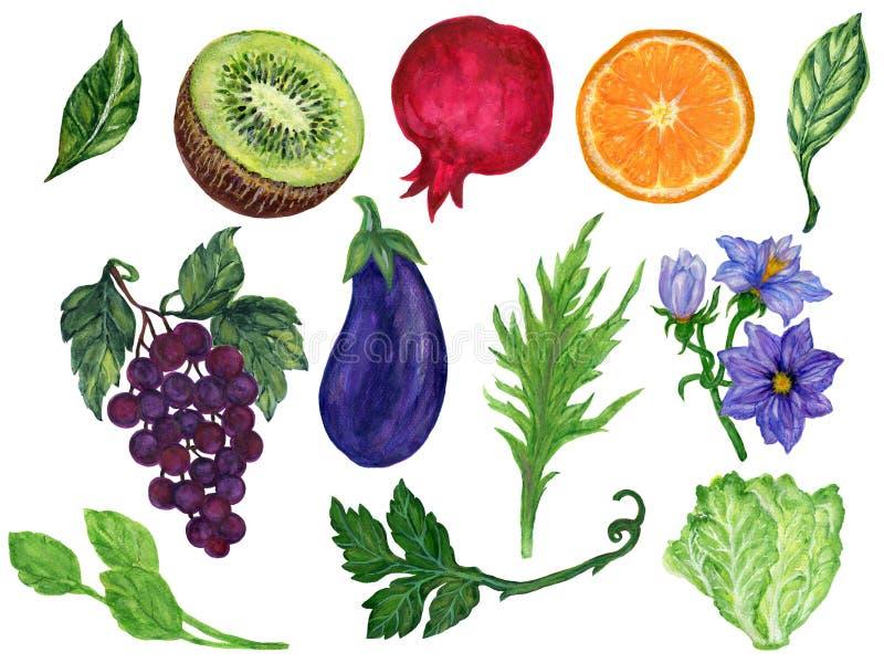 Akwareli ręki farby eco menu karmowy organicznie cukierniany projekt naturalni świezi owoc i warzywo ilustracyjni ilustracji