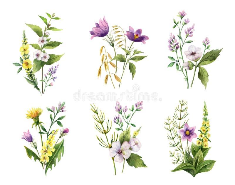 Akwareli ręki wektor malujący set bukiety z śródpolnymi kwiatami royalty ilustracja