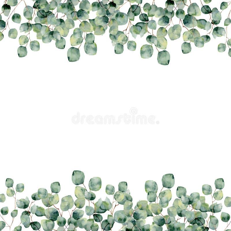 Akwareli rama z eukaliptusowym srebnym dolarem botaniczny projekt ilustracji