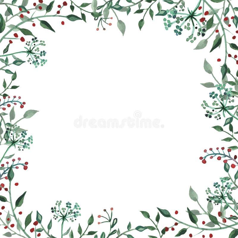 Akwareli rama z wildflower, ziele, liść kolekcja ogród, dziki ulistnienie, kwiaty, rozgałęzia się ilustracji
