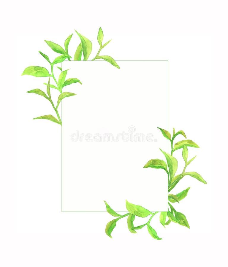 Akwareli rama z zielona herbata liśćmi obraz royalty free