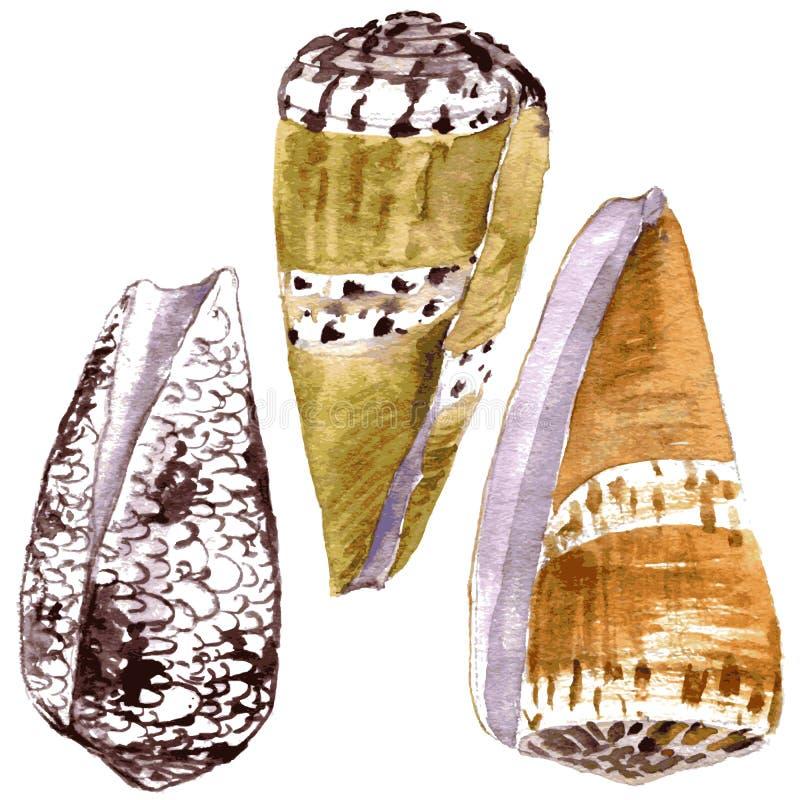 Akwareli seashells royalty ilustracja