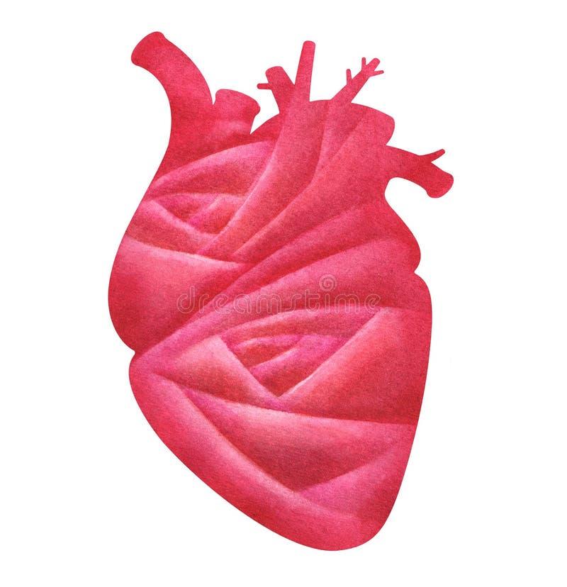 Akwareli serce z róża wzorem na bielu royalty ilustracja