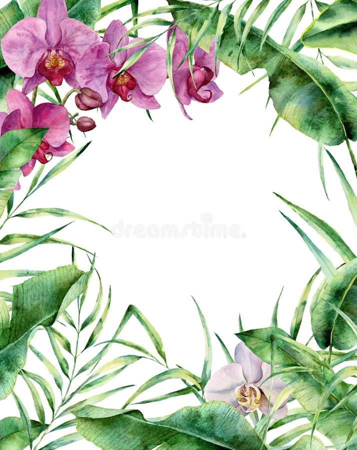 Akwareli tropikalna kwiecista rama Wręcza malującą egzot granicę z drzewko palmowe liśćmi, banan gałąź i orchideami odizolowywają royalty ilustracja