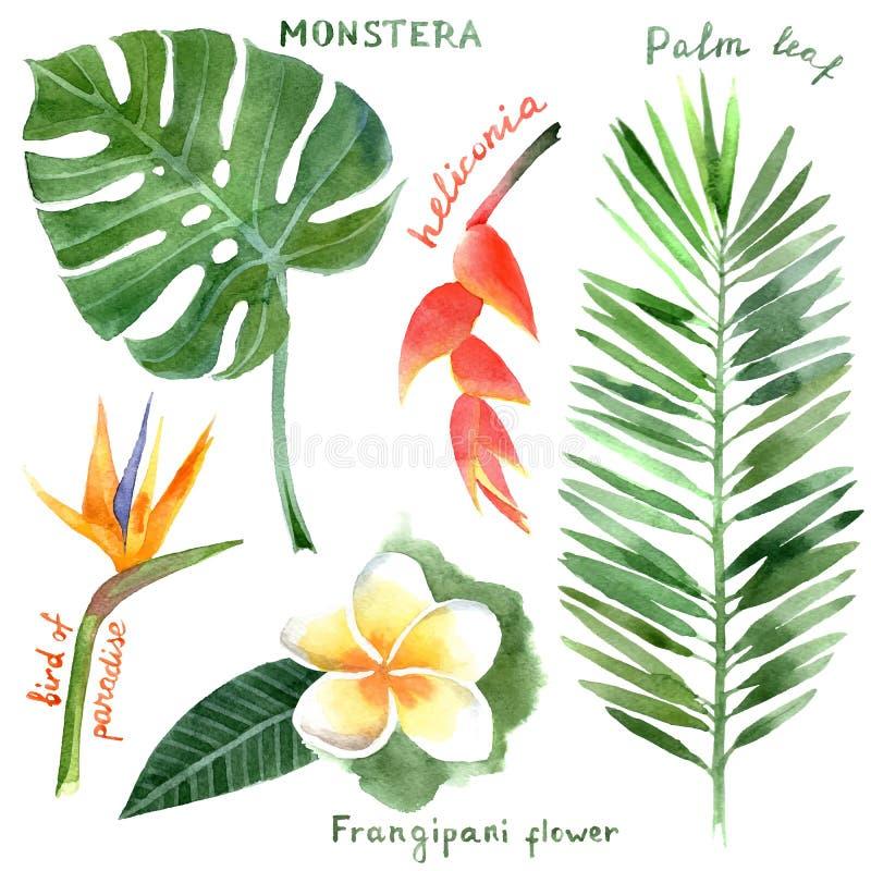 Akwareli tropikalne rośliny ilustracji