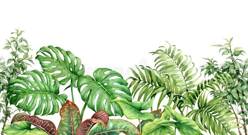 Akwareli Tropikalnych rośliien Bezszwowa granica ilustracji