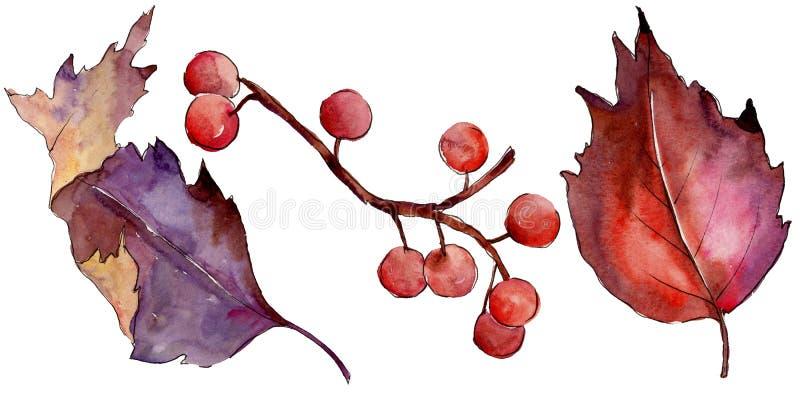 Akwareli viburnum kolorowy liść Liść rośliny ogródu botanicznego kwiecisty ulistnienie Odosobniony ilustracyjny element ilustracji