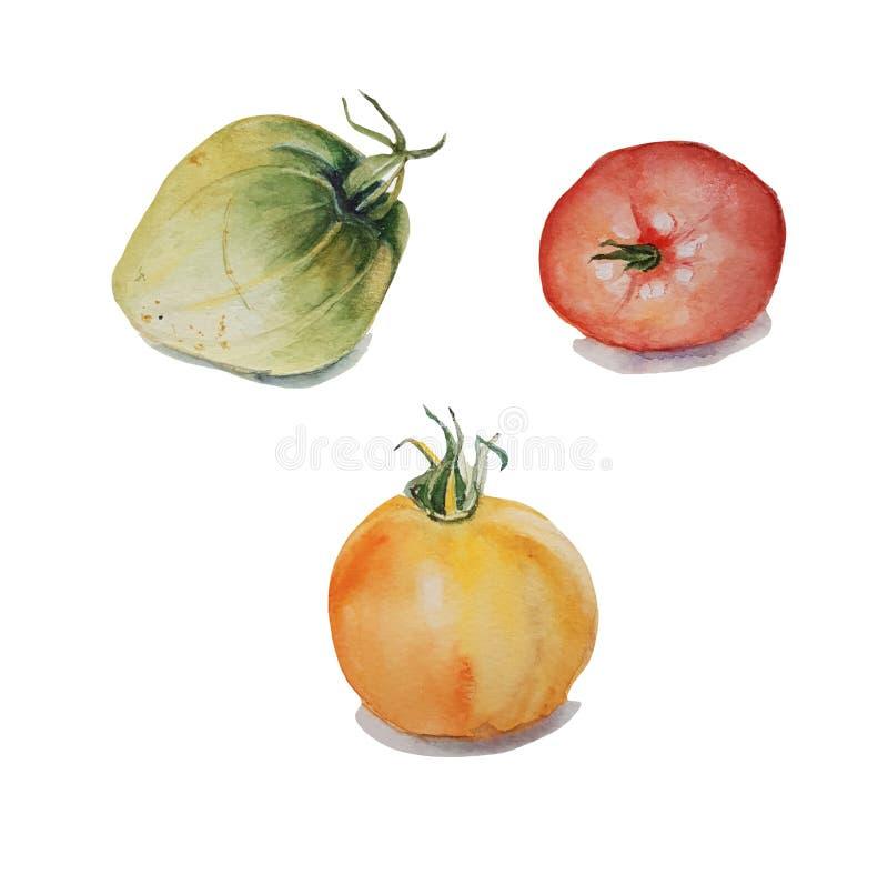 Akwareli warzywa zbliżenia, set obraz royalty free