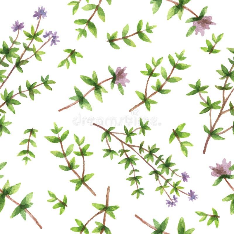 Akwareli wektorowa bezszwowa deseniowa ręka rysująca zielarska macierzanka royalty ilustracja