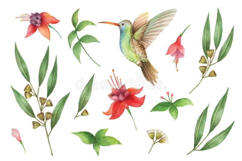 Akwareli wektorowa ręka malował set z eukaliptusowymi liśćmi i Hummingbird ilustracji