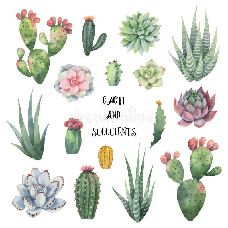 Akwareli wektorowy ustawiający kaktusy i sukulent zasadza odosobnionego na białym tle royalty ilustracja