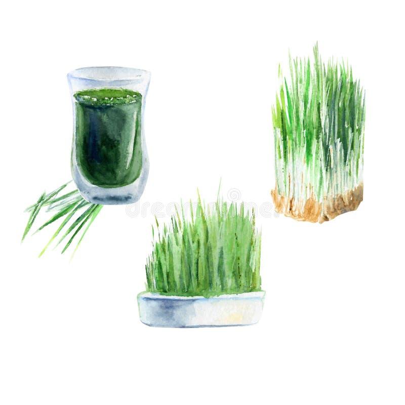 Akwareli wheatgrass royalty ilustracja