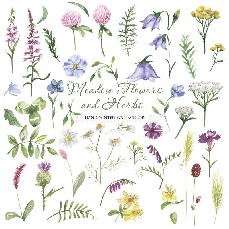 Akwareli wildflowers, łąka kwitną, ziele, rośliny Kwiatu botaniczny set na białym tle ilustracji