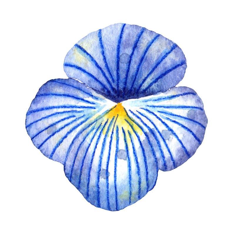 Akwareli wildflowers Bławy Pansy flowerhead royalty ilustracja