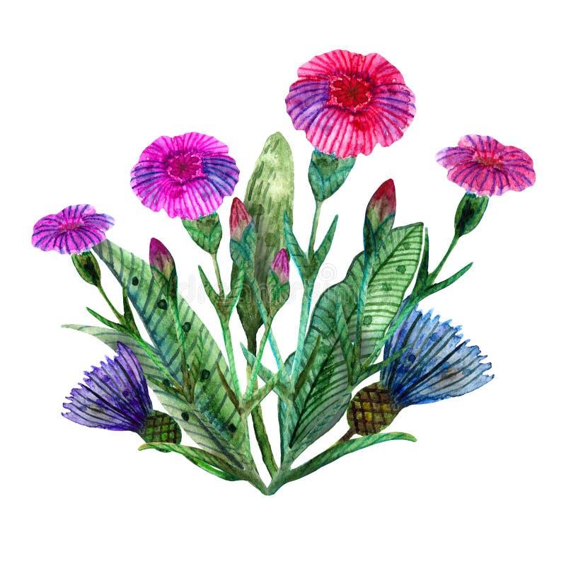 Akwareli wildflowers Odosobniony bukiet różowi łąkowi goździki i błękitni cornflowers ilustracja wektor