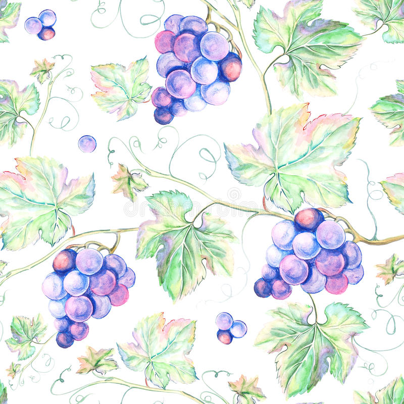 Akwareli winogrono royalty ilustracja