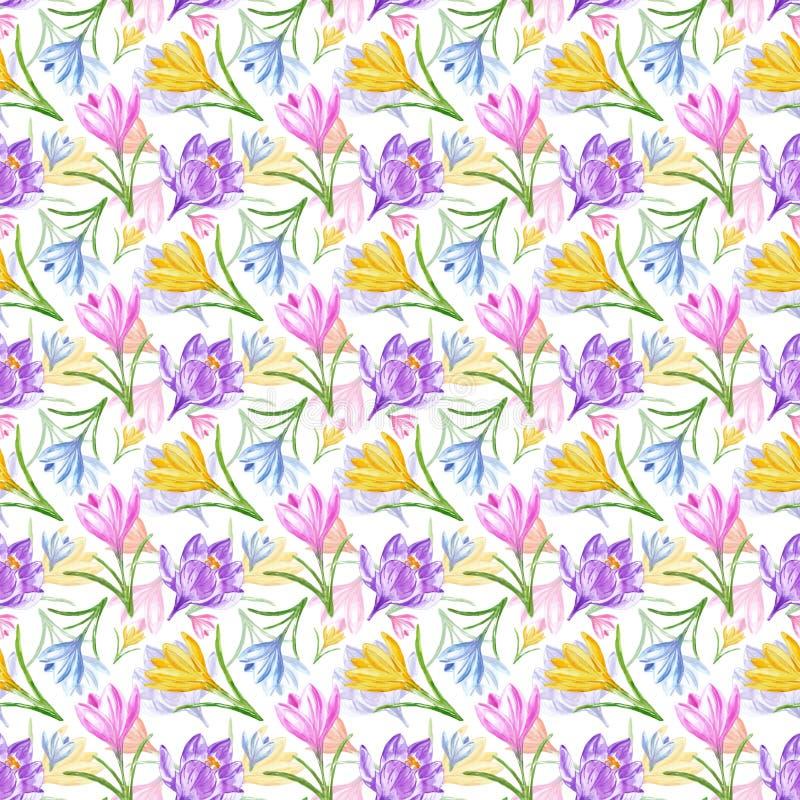 Akwareli wiosna kwitnie bezszwowego wzór Ręka malujący kolorowi krokusy na białym tle zdjęcie stock